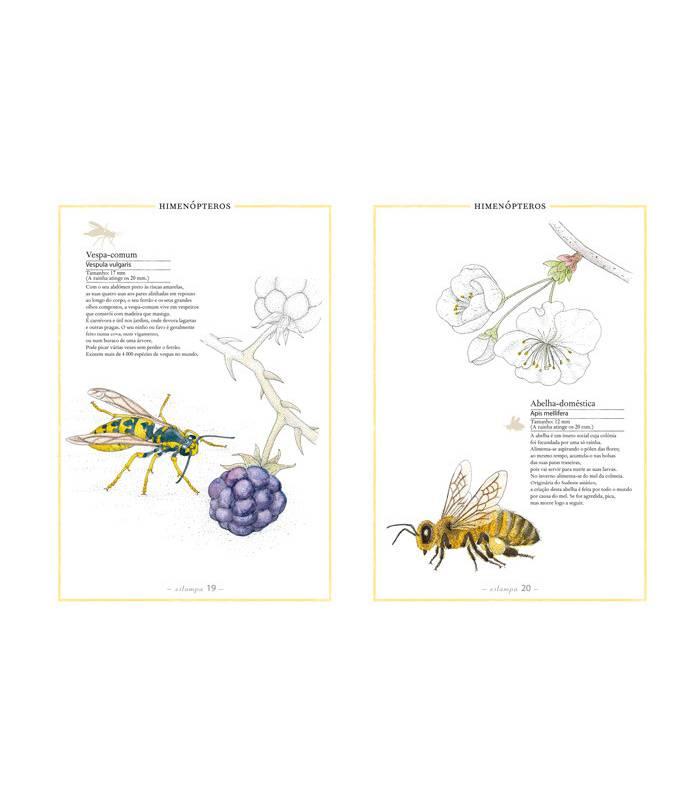 cuaderno montessori insectos