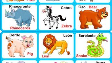 animales inglés primaria