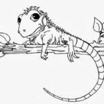 camaleon colorear reptil