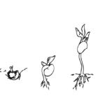 fases-crecer-semilla-colorear