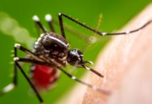 remedios para evitar las picaduras de mosquitos