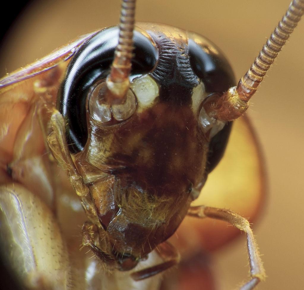 trampa cucarachas acido borico