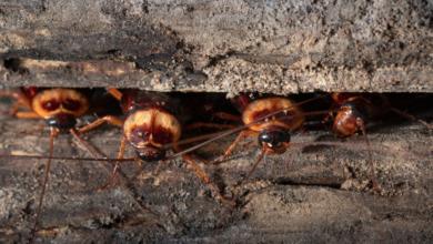 trampas caseras para cucarachas